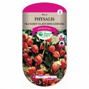Graines Physalis Franchetti - Lanterne Chinoise - Les Doigts Verts