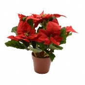 Poinsettia Artificiel en Soie Dans un Pot - Décoris